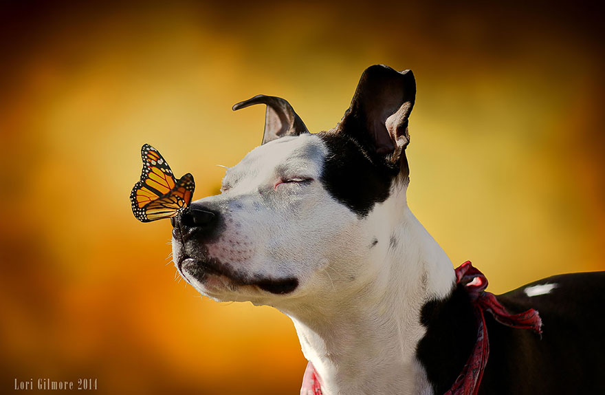 The Pit Bull And The Butterfly