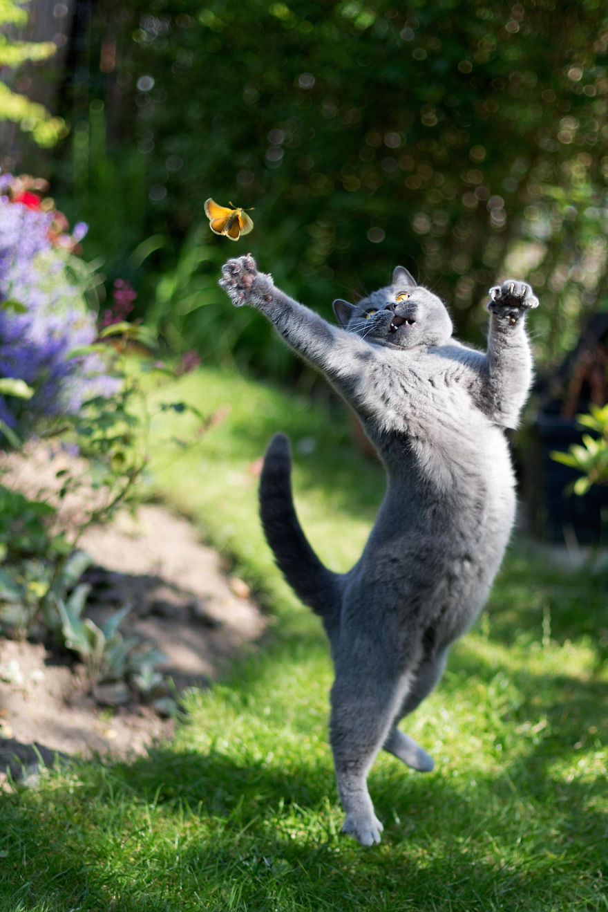 Cat Trying To Catch A Butterfly