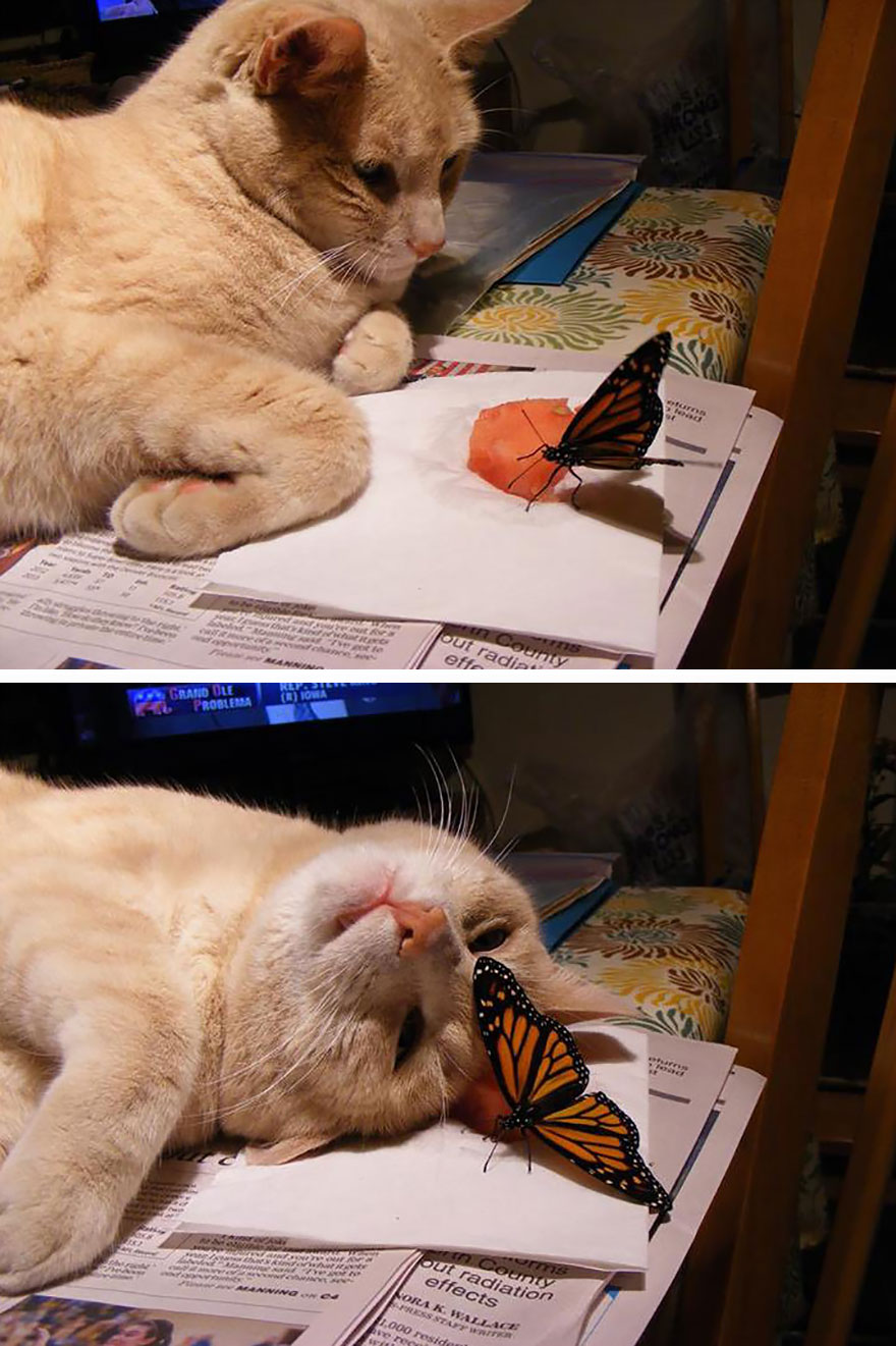 Cat With A Butterfly
