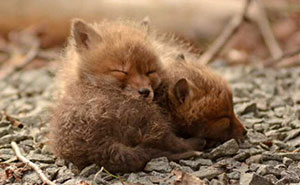Father And Daughter Find Baby Foxes In Their Backyard