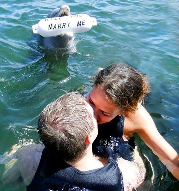 """All the effort the dolphin put in for this proposal, and she still goes for the other guy"""