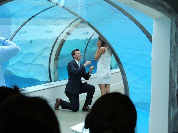Proposal In An Aquarium