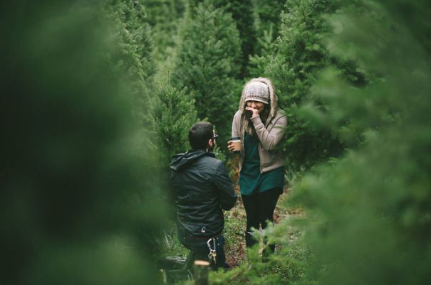 Proposal At The Christmas Tree Farm