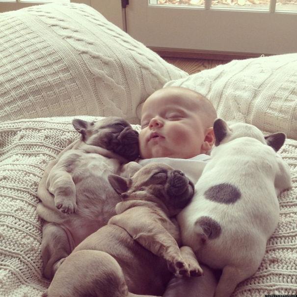 111 Beautiful Bulldog Puppies That Will
