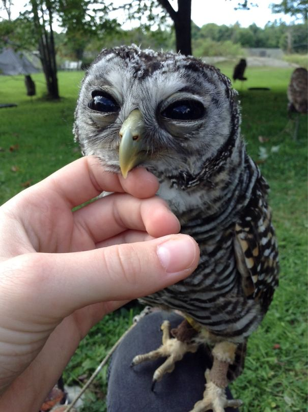 There's A Bird On The Beak Of This Owl