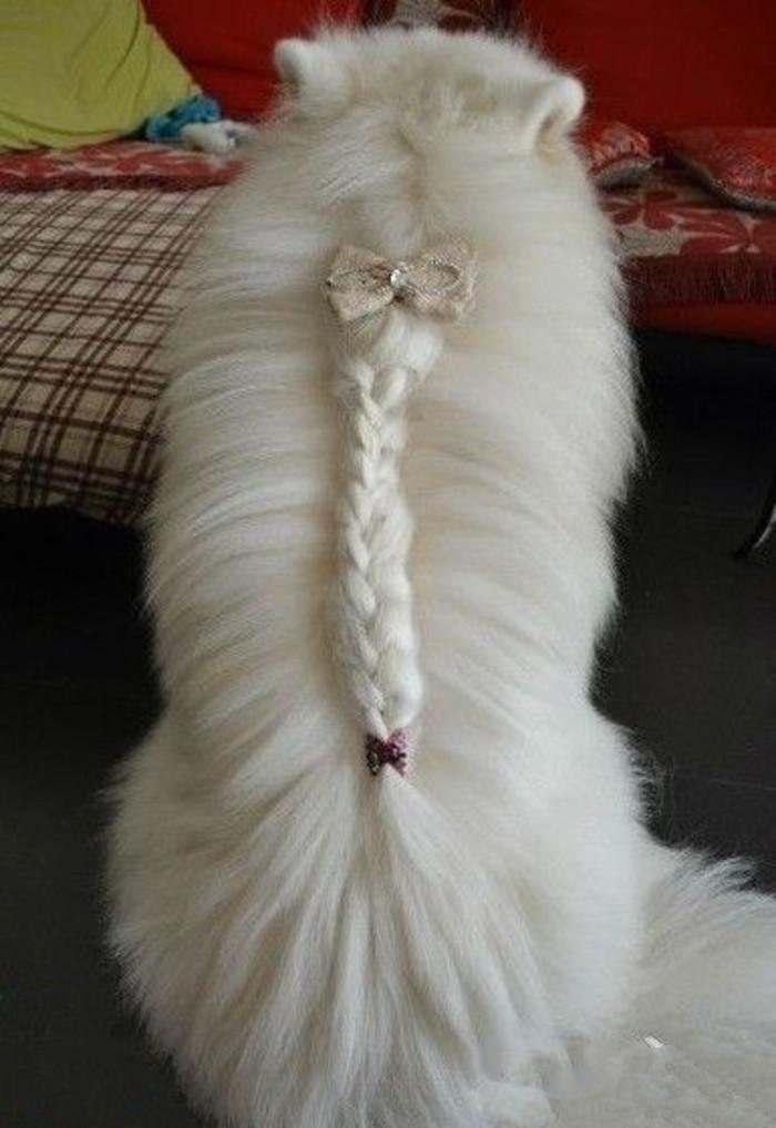 Fancy Cat Braid