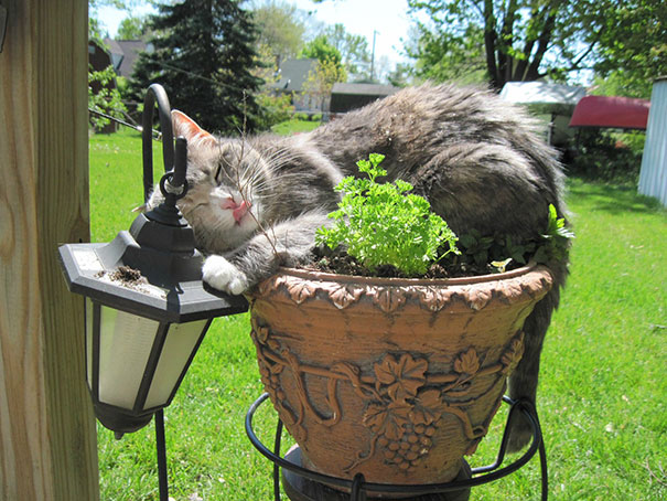 My Cat Is On The Pot
