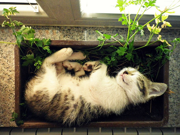Cat Sleeping In A Flower Pot