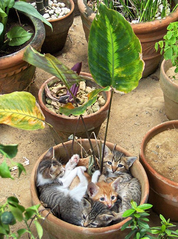 Flowerpot Kittens