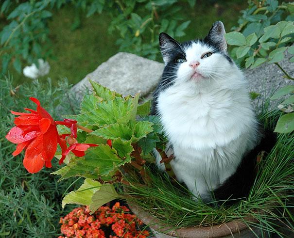 Ain't I Flowering ?
