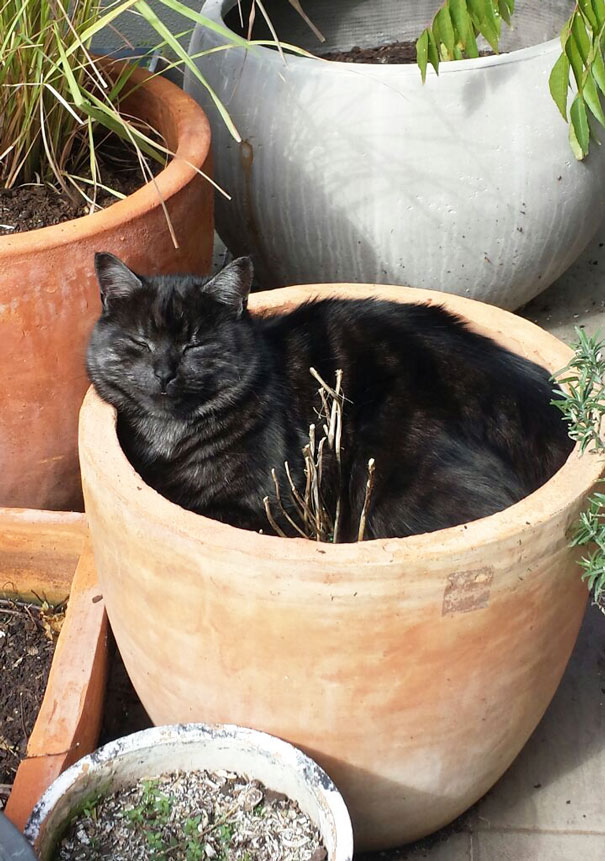 Enjoying His Pot