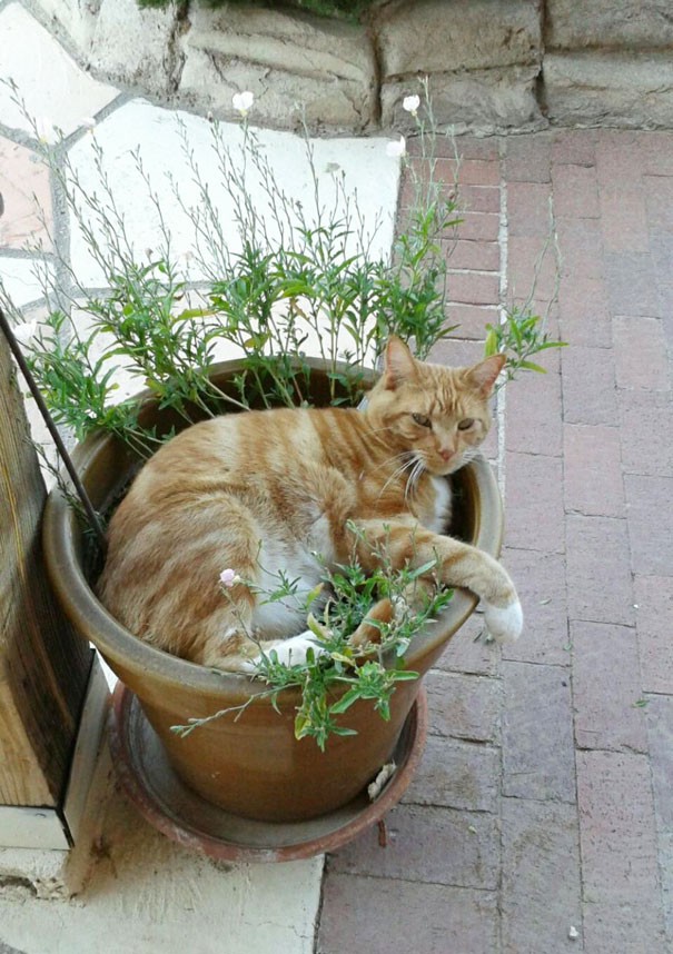 My Poor Plant