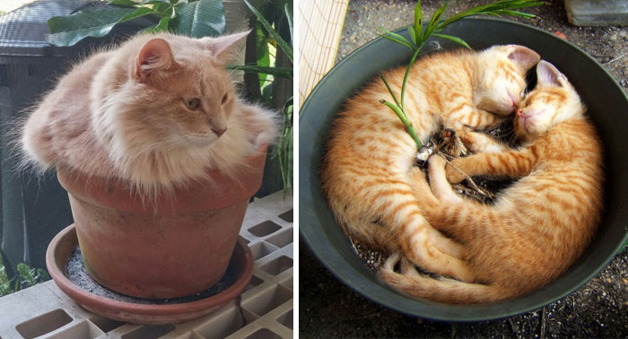 18+ Cat-Plants You Probably Shouldn't Water