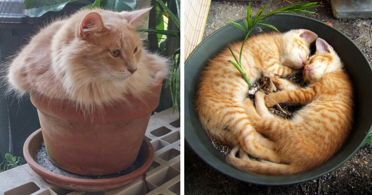148 Cat Plants You Probably Shouldn T Water Bored Panda