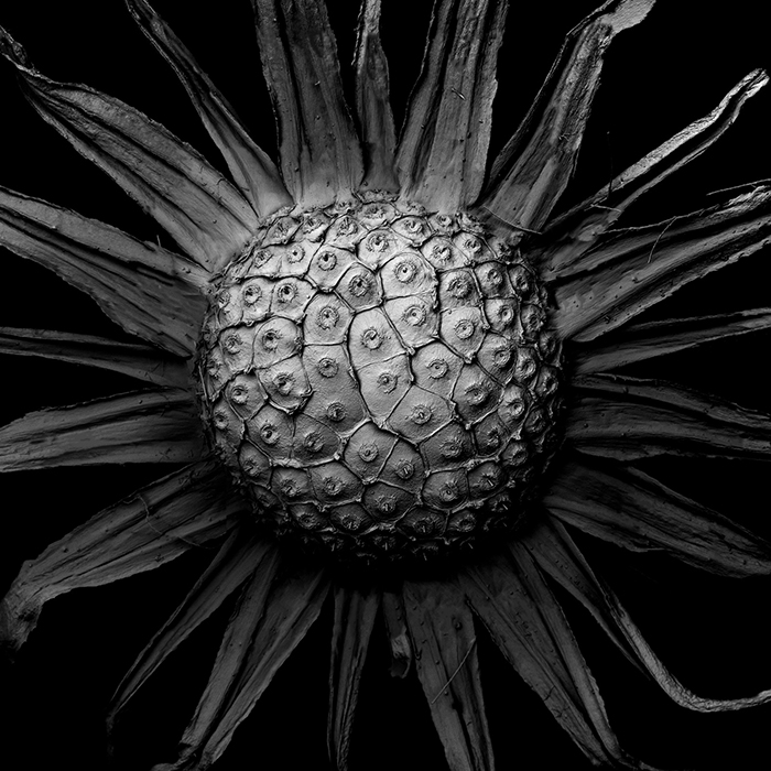 Decaying Plants I Captured With A Scanning Electron Microscope