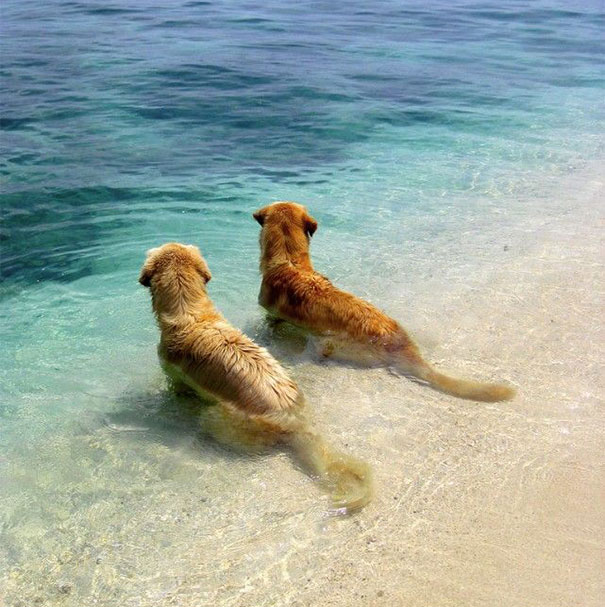 Best Friends At The Beach