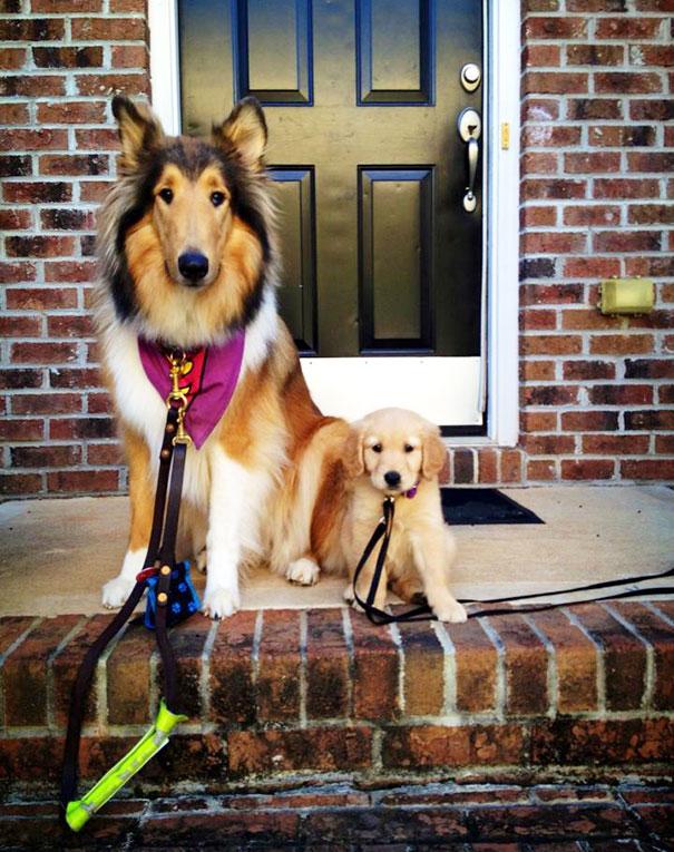 Meet Stella & Amelia