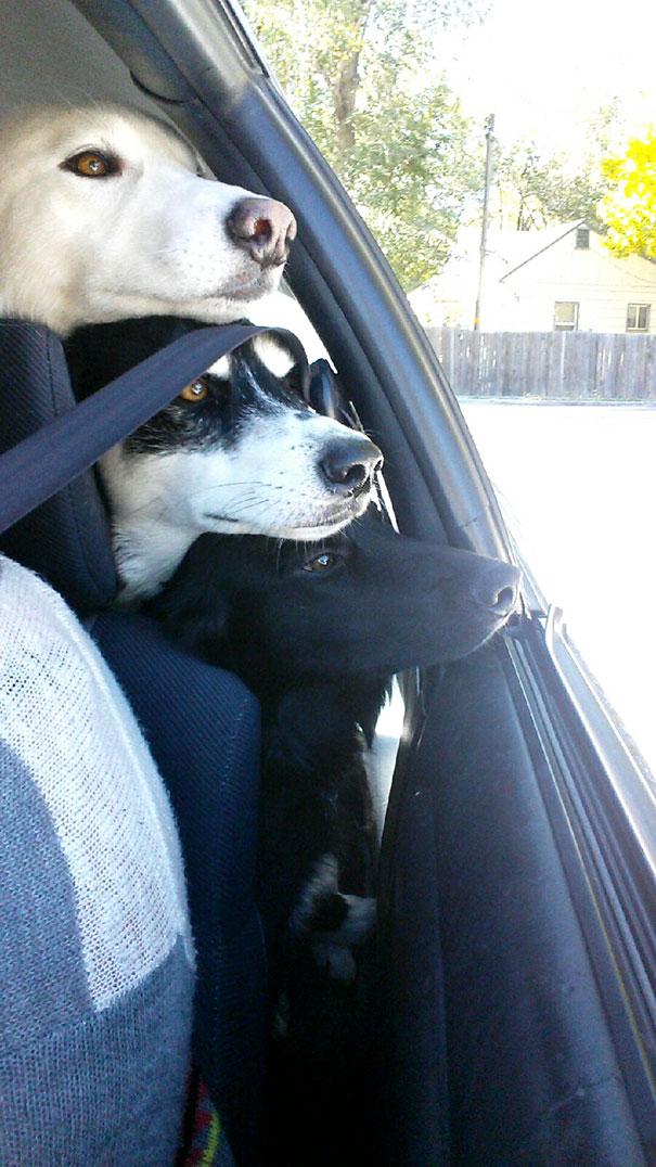 Doggy Totem