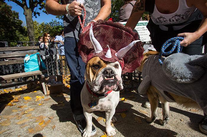 dog-costumes-dinosaur-triceratops-3