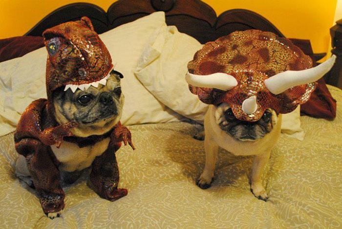 costum caini in forma de dinozaur-3