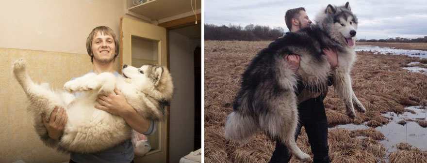 Cutest of the cutest: Before & After Pictures of dogs growing up.