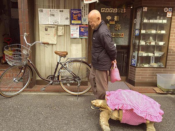 -idosos-man-walking pet-africano-estimulou-tartaruga-sulcata-Tóquio-Japão-2