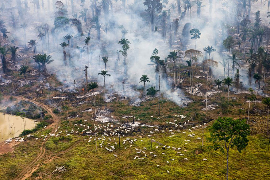 """Part Of The Amazonian Jungle In Brazil, Burnt Down To Be """"Repurposed"""""""