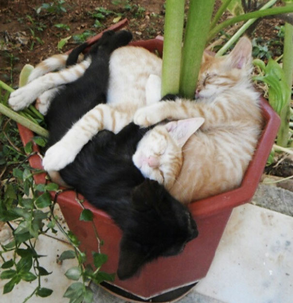 The Right Way To Plant Your Cats