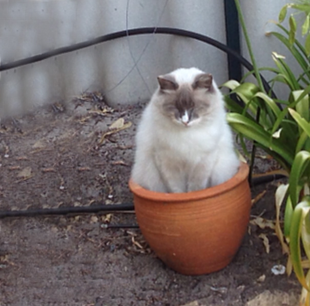 Cat Fell Asleep In A Pot