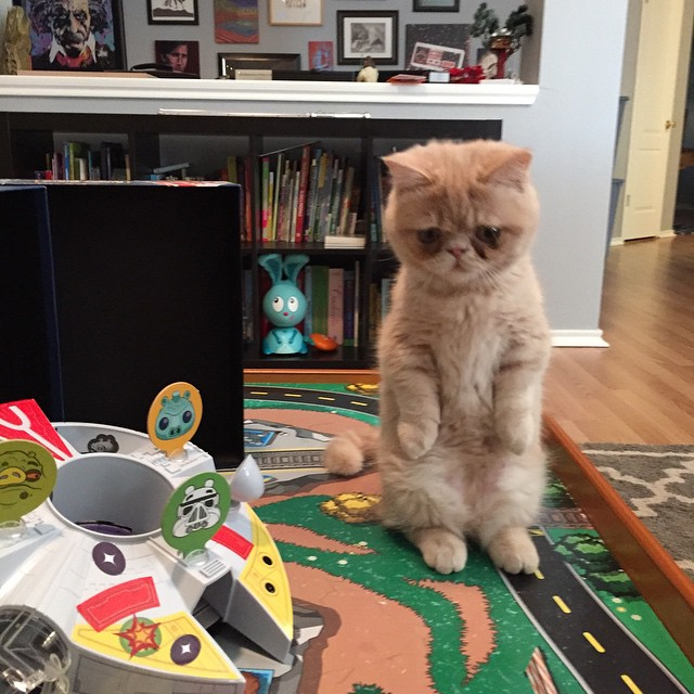 george-the-cat-standing-on-2-legs-14