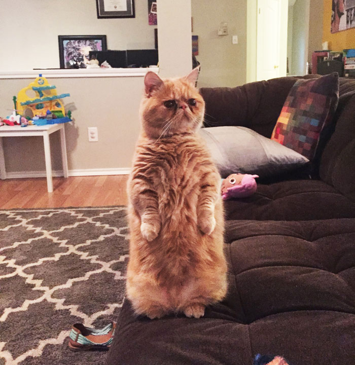 Meet George, The Human-Cat Who Prefers Standing On 2 Legs