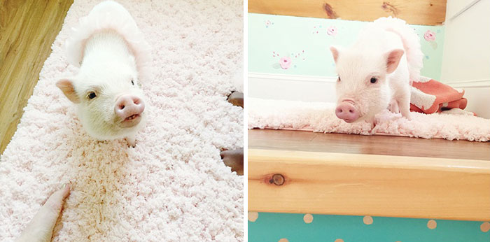 girl-piglet-friendship-tutu-twins-libby-pearl-7