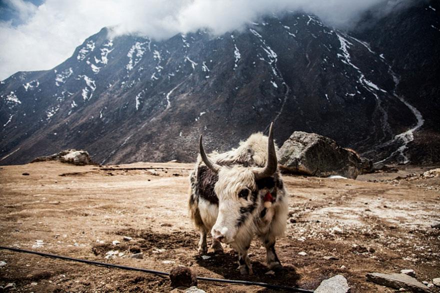 hiking-travel-photography-berta-tilmantaite-himalayas-5