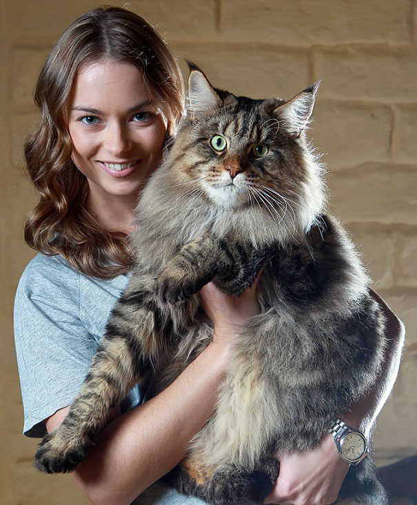 14 Biggest Cats In The World You