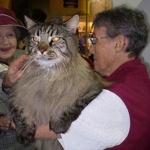 Huge Cat