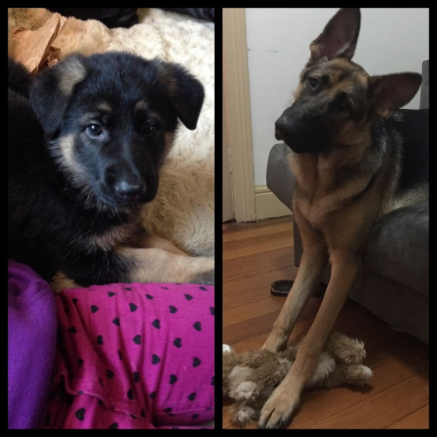 Berlin, 8weeks-1year