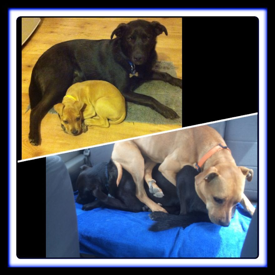 Our Rescue Dogs Neo And Mia... Year And A Half Later And Neo Is Still An Awesome Big Brother :)