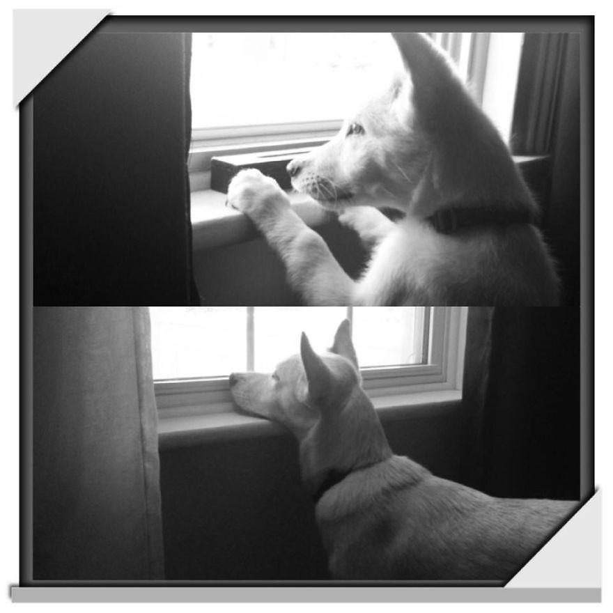 Marlo Watchdog Pt 2