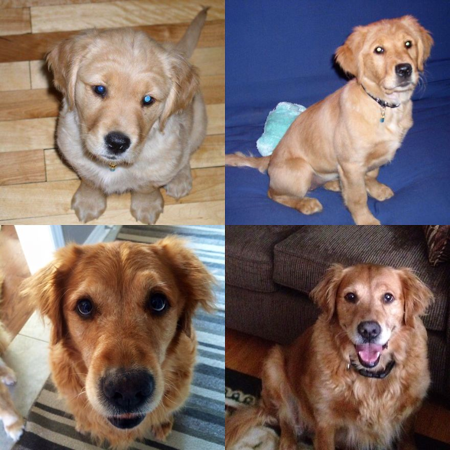 The Evolution 8 Weeks To 10 Yrs