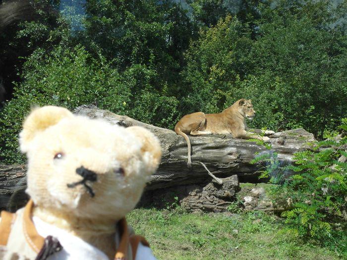Cute Bear Herman Photobomb!