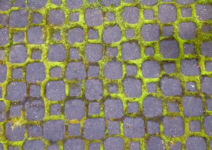 Moss On The Cobble Stones