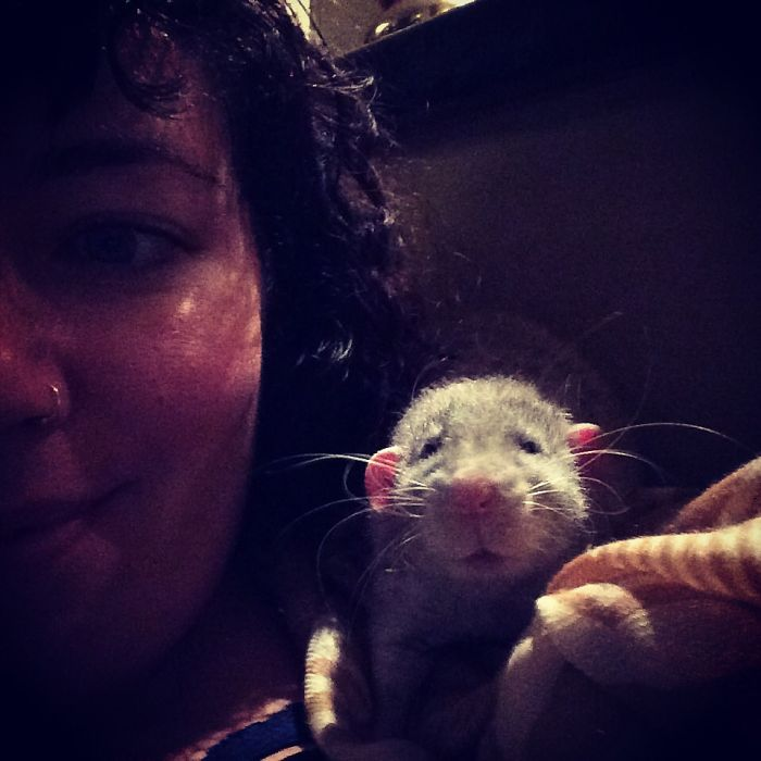 Tired Rattie