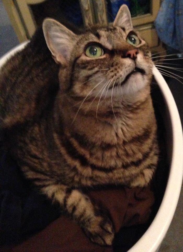 Tigger In The Laundry Basket Of Warm Clothes!