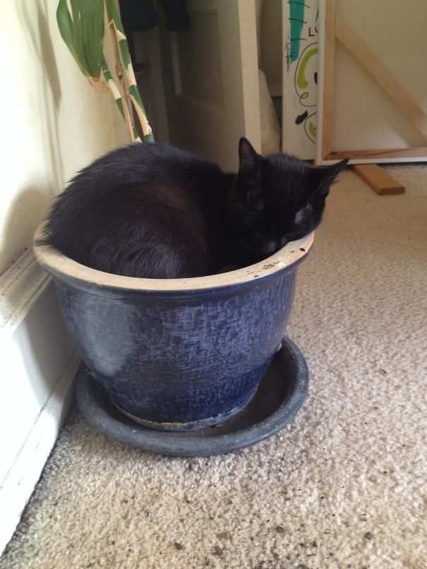 Potted Kidden. If It Fits, It...sleeps.