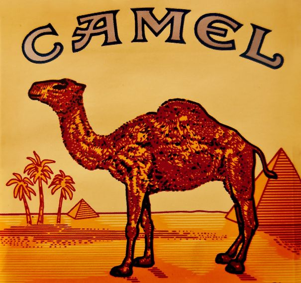 Camel, Front Legs: A Man Who Piss