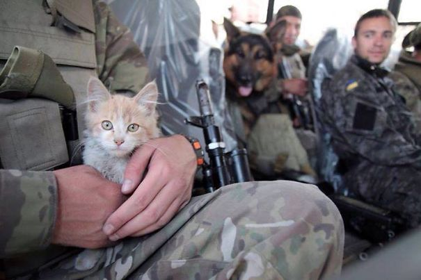 Kitten And Dog Support Ukrainian Soldiers, 2015