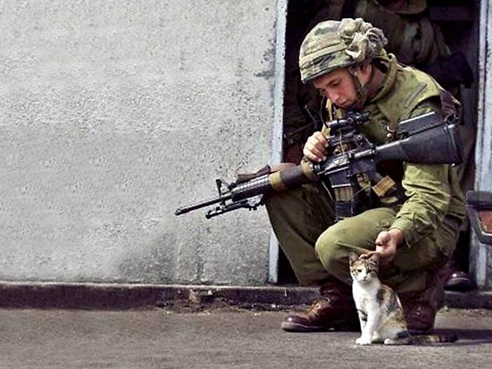 Soldier And Kittens