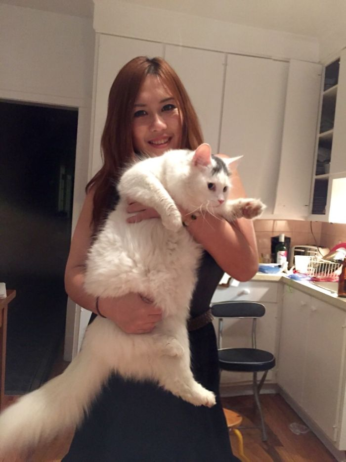 White As Snow Big Cat