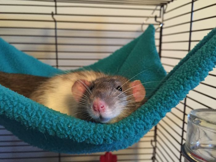 Willow In Her Hammock