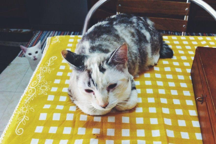 Cat Photobomb
